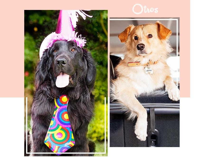 Perro con adornos festejando su cumpleaños, Liverpool, Fiesta mascota, Mesa de Regalos